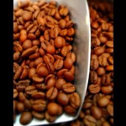 Café Ethiopie Moka Lekempti